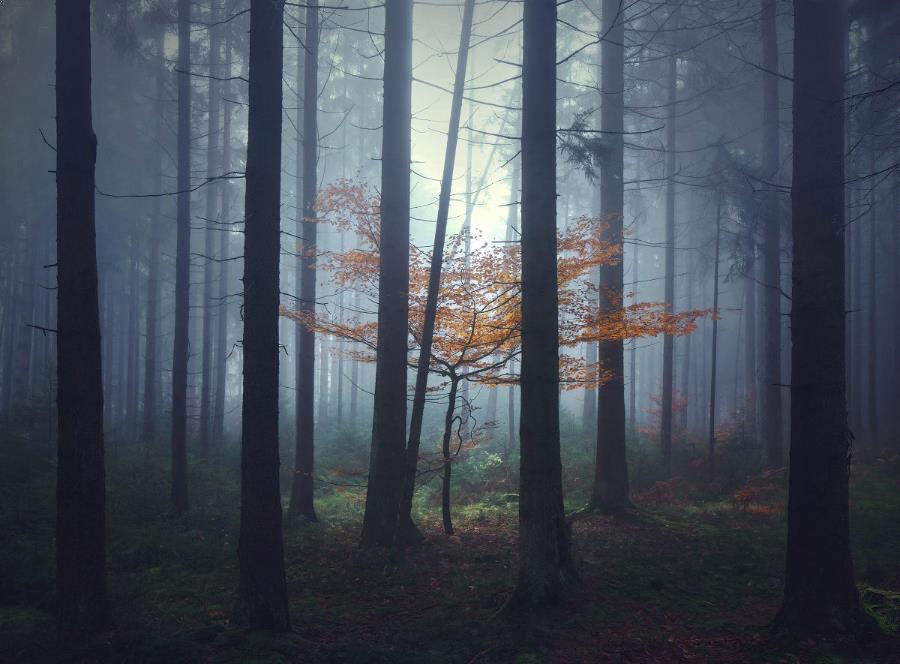 Peisaje-frumoase_14