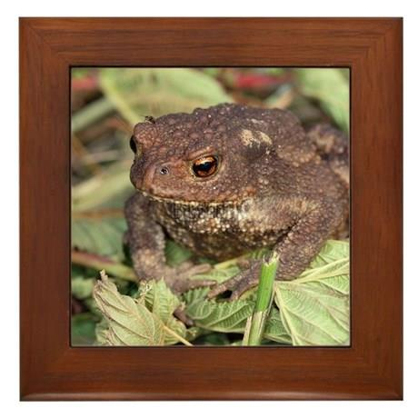 Tablou_urat_gray_toad_bufo_bufo_framed_tile